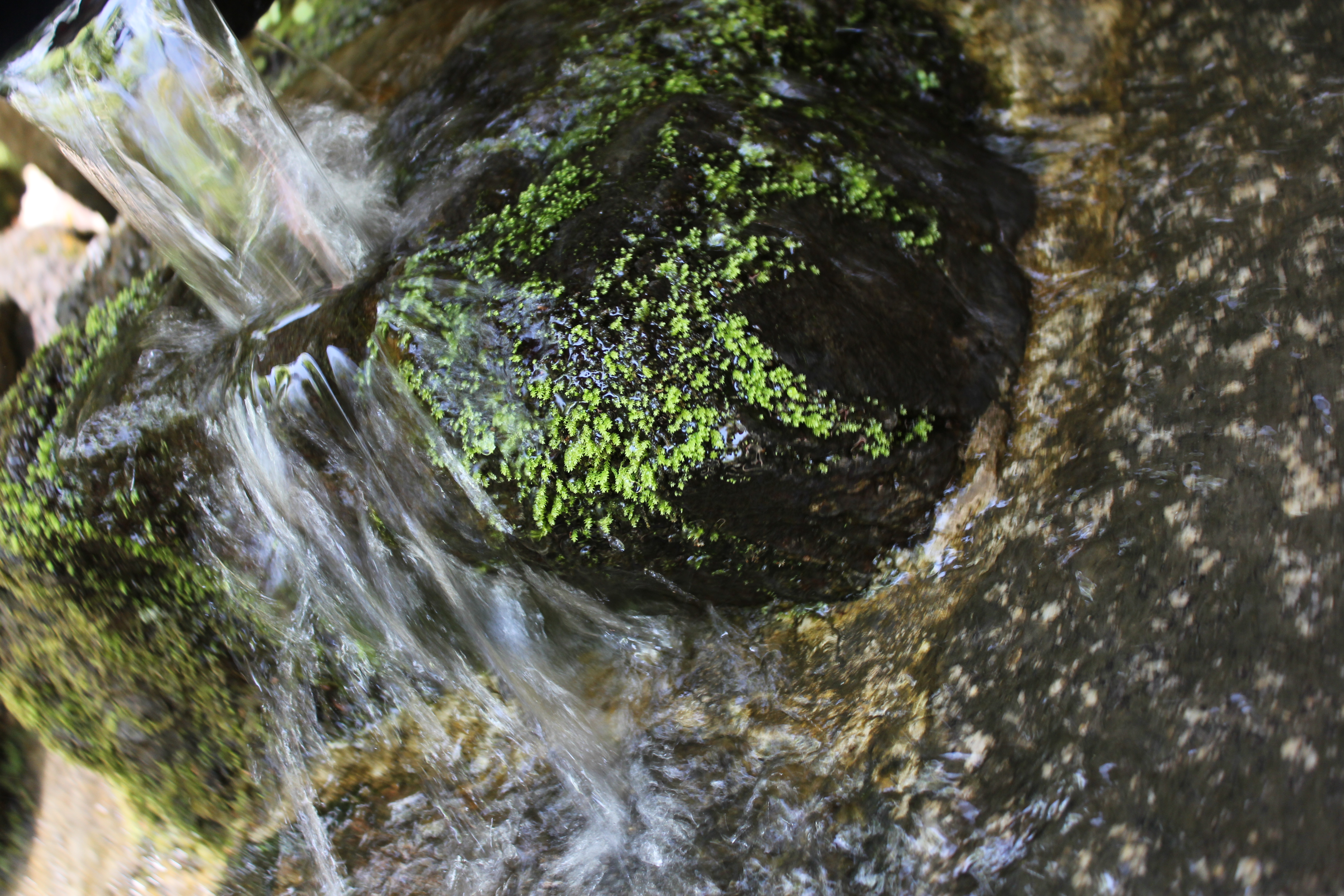 05 石清水社の湧き出す石清水2