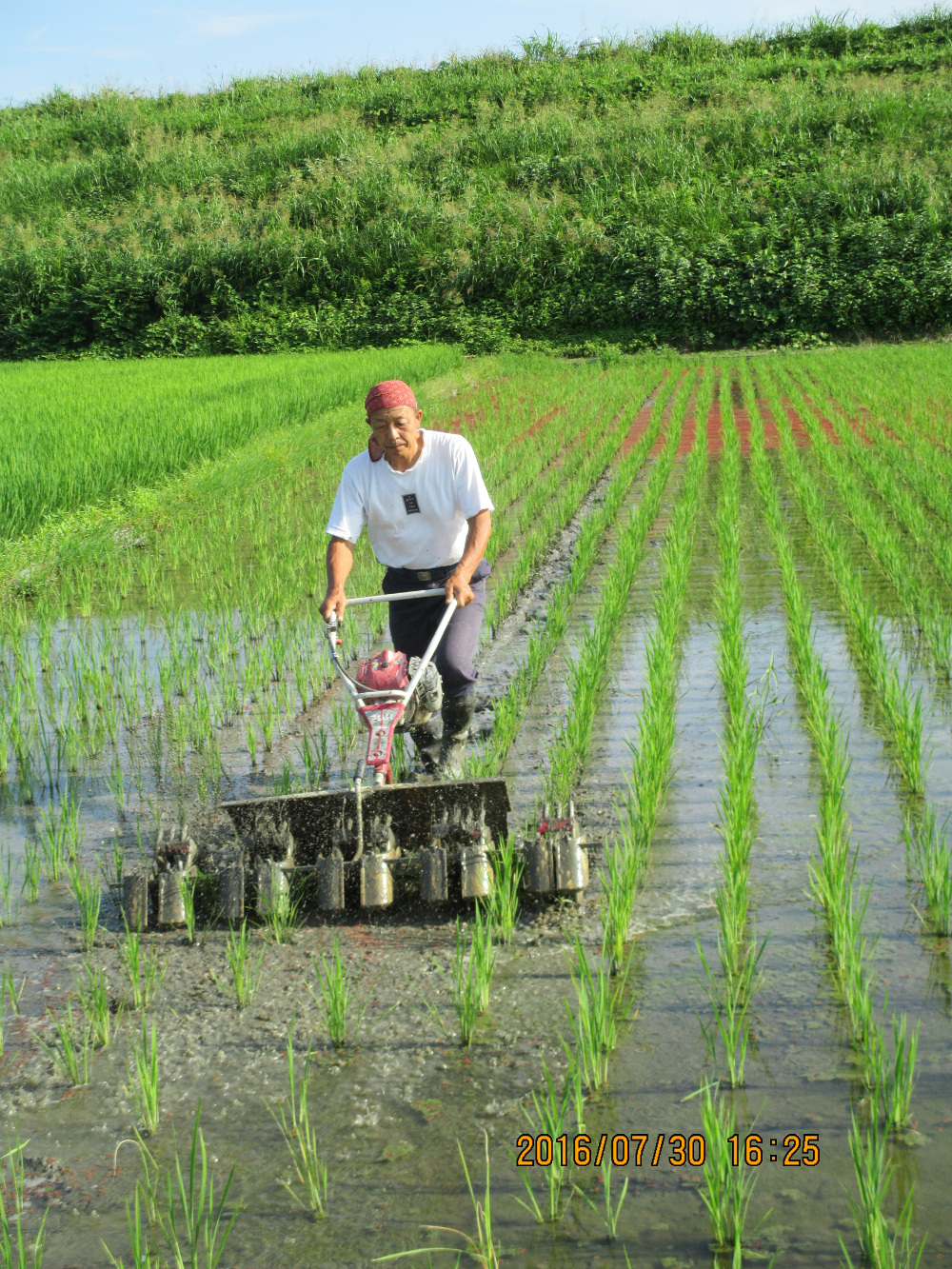 除草作業丸山 いばら農園