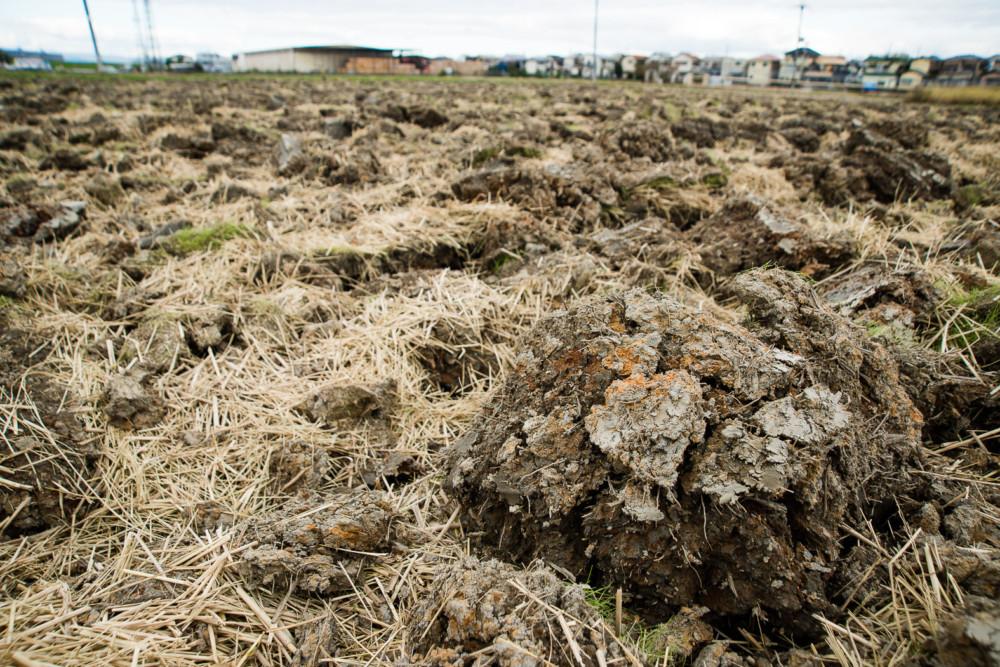 辻農園 大きな土のかたまり